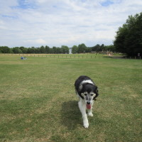 Brixworth dog walks, Northamptonshire - Dog walks in Northamptonshire