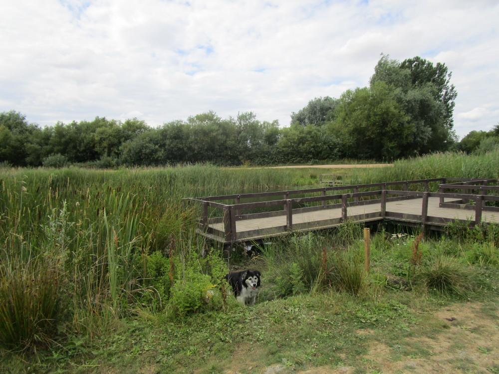 Lakeside dog walks off the A45, Northamptonshire - Dog walks in Northamptonshire