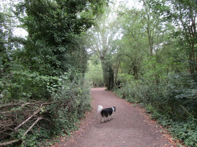A14 Junction 33 dog walk with cafe, near Cambridge, Cambridgeshire - Driving with Dogs