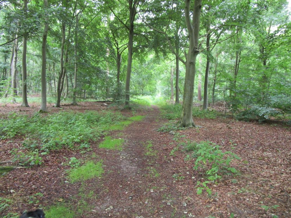 Thetford Forest dog walks, Norfolk - Dog walks in Norfolk