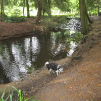 Lynford dog walk near Thetford, Norfolk - Dog walks in Norfolk