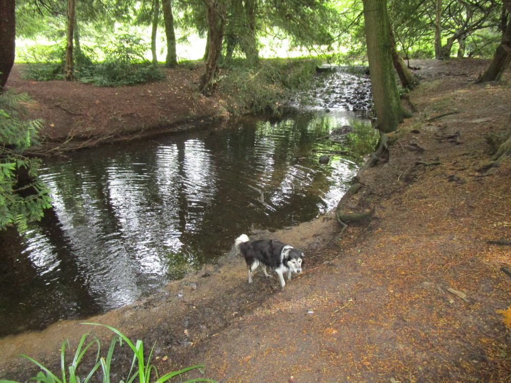 Lynford dog walk near Thetford, Norfolk - Dog walks in Norfolk