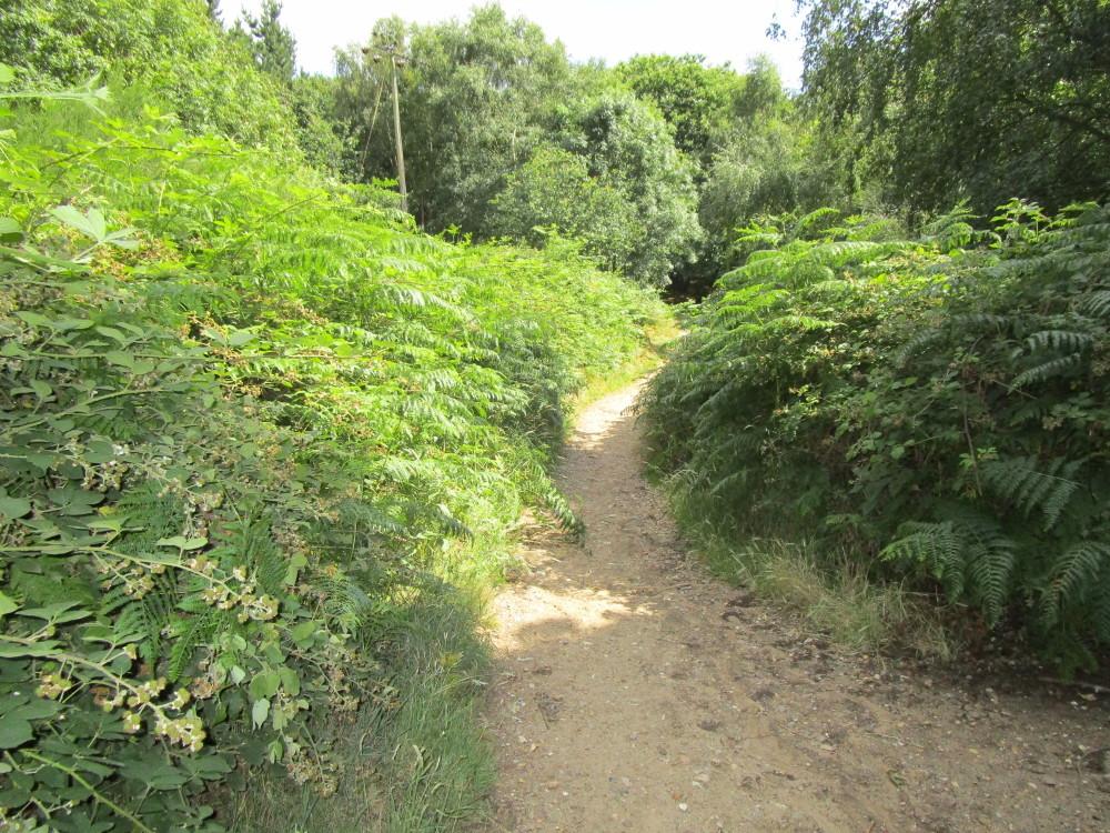 A14 junction 57 dog walk near Ipswich, Suffolk - Dog walks in Suffolk