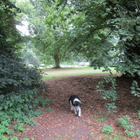 A14 Junction 44 Bury St Edmunds dog walk, Suffolk - Dog walks in Suffolk