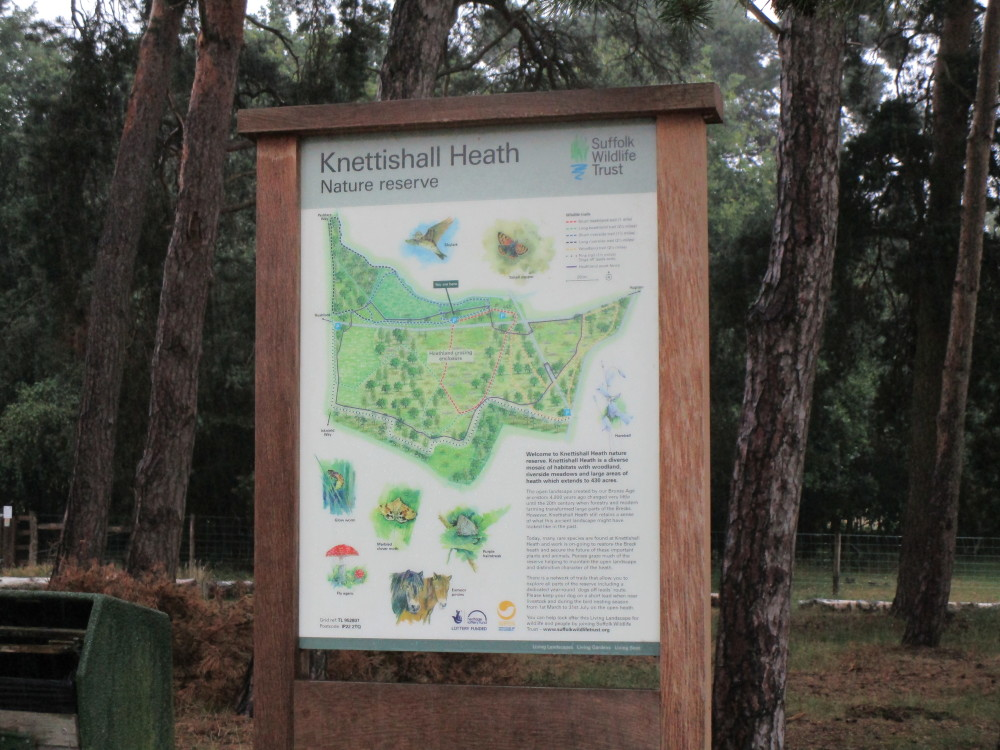 Knettishall Heath dog walk near Thetford, Suffolk - Dog walks in Suffolk