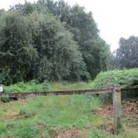 Knettishall Heath dog walk near Thetford, Suffolk - Dog walks in Suffolk