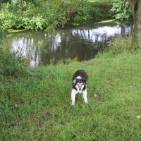 A14 Junction 51 Needham Market dog walk, Suffolk - Dog walks in Suffolk