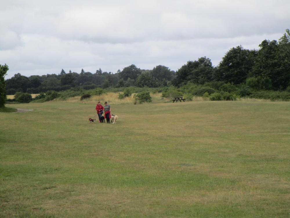 A14 Junction 56 dog walk and water park, Suffolk - Dog walks in Suffolk