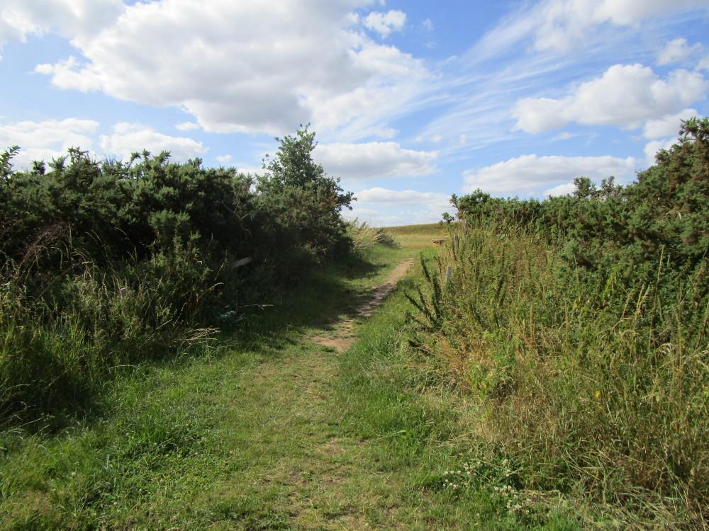A14 junction 57, Meadow dog walk, Suffolk - Dog walks in Suffolk