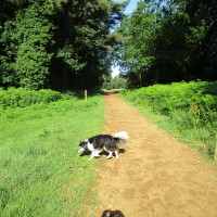 Hockham Heath dog walk, Norfolk - Dog walks in Norfolk