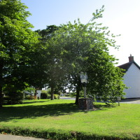 Great Hockham dog-friendly pub and dog walks, Norfolk - Dog walks in Norfolk