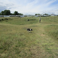 Great Yarmouth dog-friendly beach, Norfolk - Dog walks in Norfolk