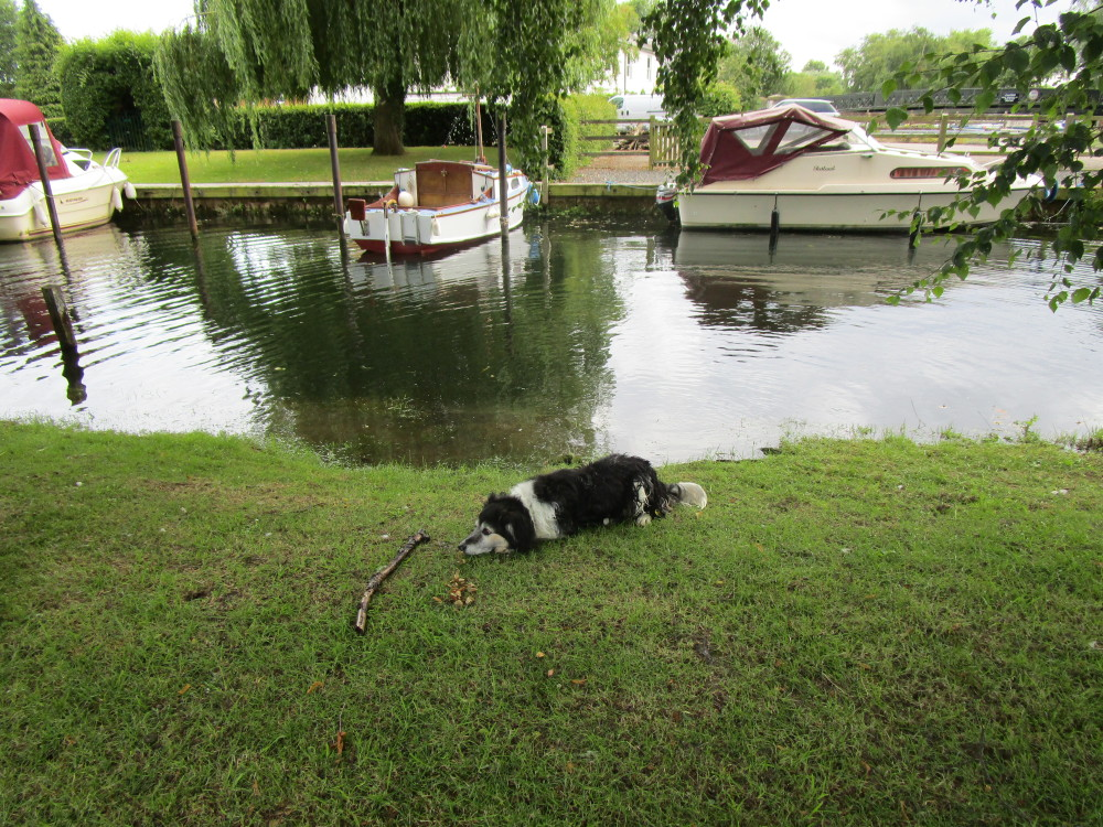 Beccles dog-friendly cafe and dog walk, Suffolk - Dog walks in Suffolk