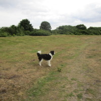 Dog walk near Diss, Norfolk - Dog walks in Norfolk