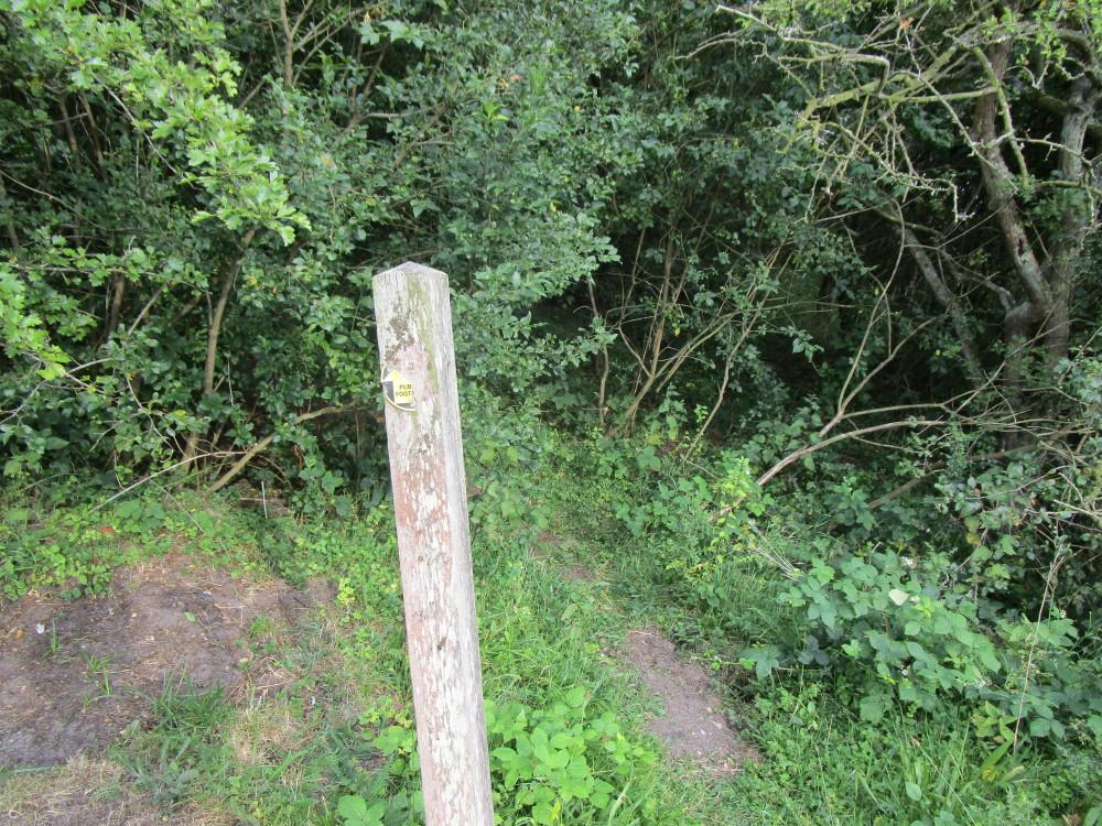 Dog walk near Diss, Norfolk - Dog walks in Norfolk