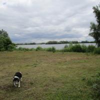 Lakeside dog walk off the A14, Cambridgeshire - Dog walks in Cambridgeshire