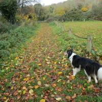 M5 Junction 19 dog walk with a cafe, Somerset - Dog walks in Somerset