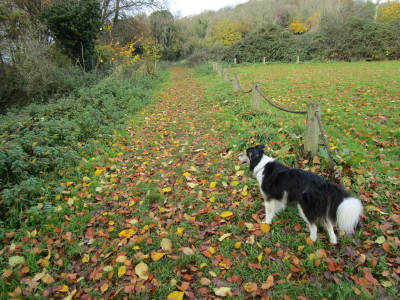 M5 Junction 19 dog walk with a cafe near Nailsea, Somerset - Driving with Dogs