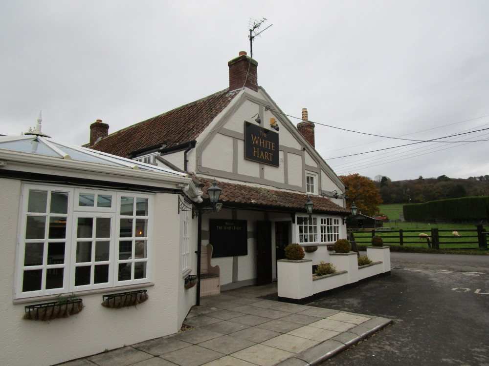 M5 Junction 21 dog-friendly pub and dog walk, Somerset - Dog walks in Somerset