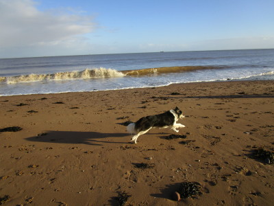 Dunster dog-friendly beach, Somerset - Driving with Dogs