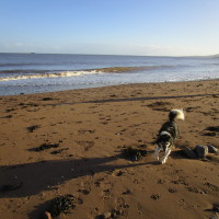 Dunster dog-friendly beach, Somerset - Dog walks in Somerset