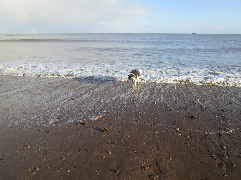 Dunster dog-friendly beach, Somerset - Dog walks in Somerset