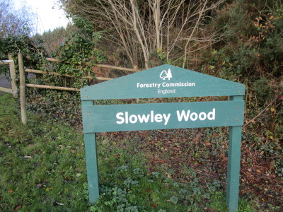 Slowley Wood dog walk, Somerset - Driving with Dogs