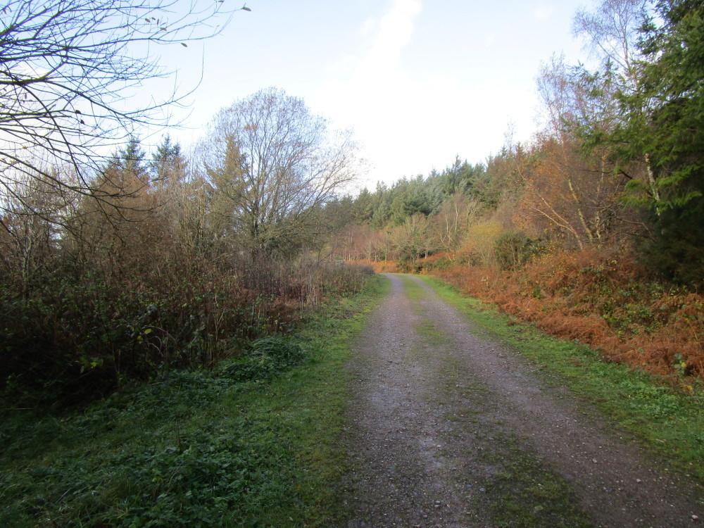 Woodland dog walk, Somerset - Dog walks in Somerset