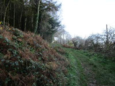 A39 forest dog walk, Somerset - Driving with Dogs