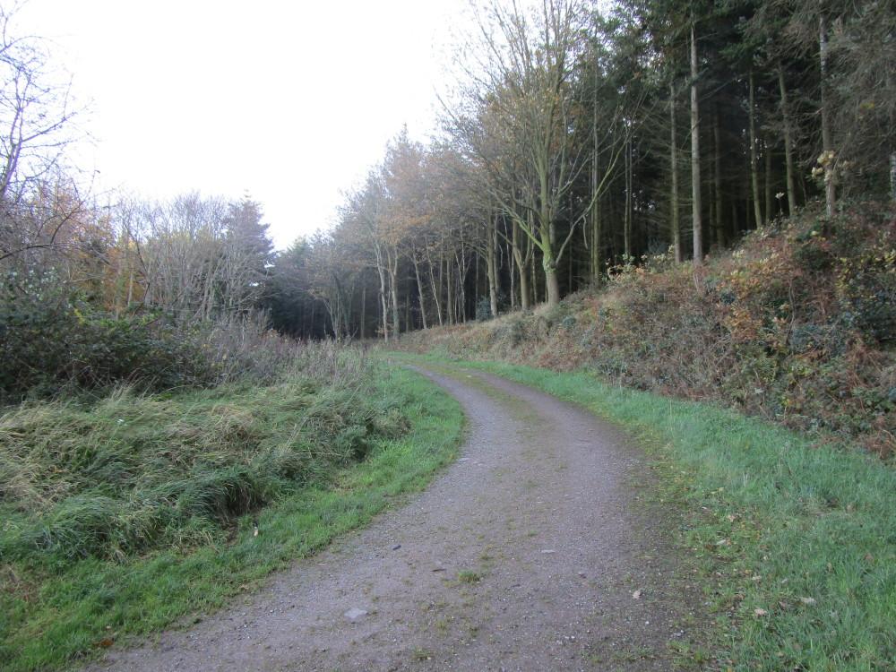 A39 forest dog walk, Somerset - Dog walks in Somerset
