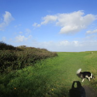 A39 dog-friendly pub with beach walk, Somerset