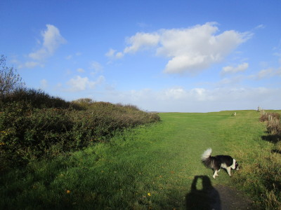 A39 dog-friendly pub with beach walk, Somerset - Driving with Dogs