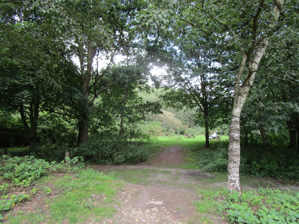 Riverside Park dog walk near Bewdley, Worcestershire - Dog walks in Worcestershire