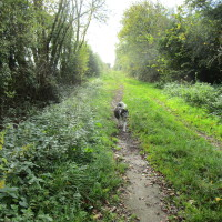 A4260 dog-friendly pub with dog walk, Oxfordshire - Dog walks in Oxfordshire