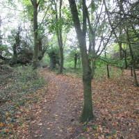 Bicester area dog-friendly pub with dog walk, Oxfordshire - Dog walks in Oxfordshire