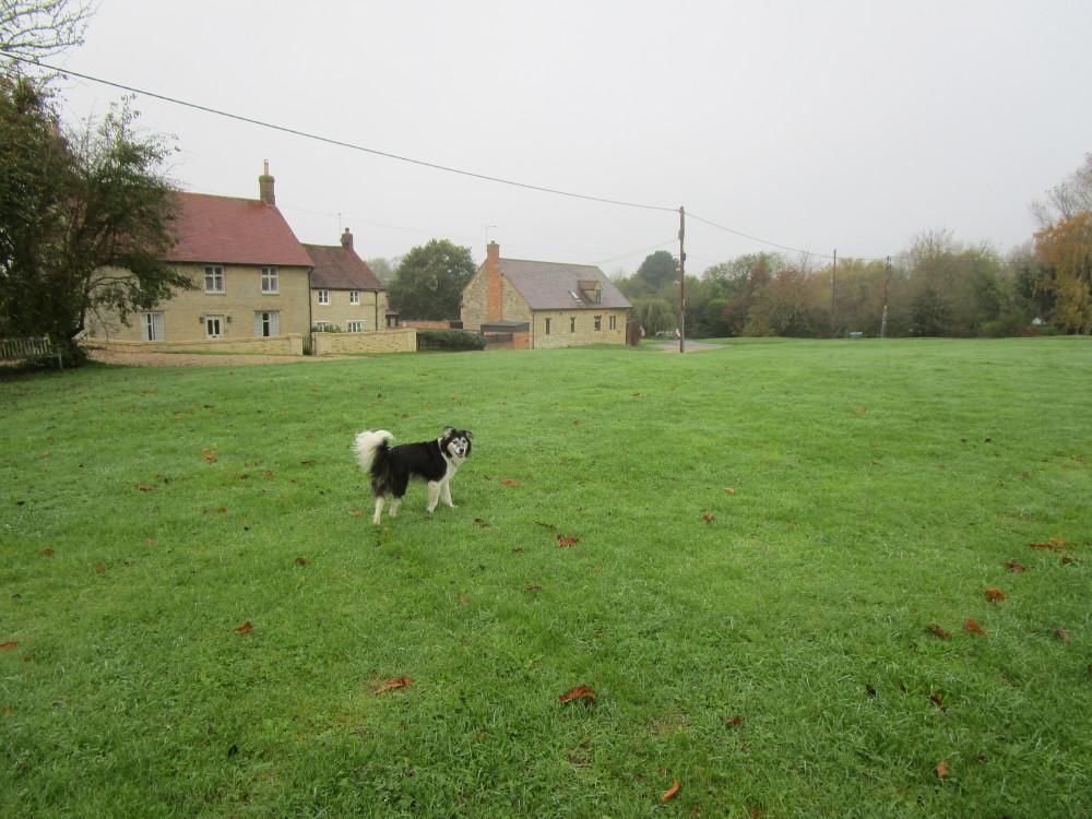 M40 Junction 10 dog-friendly pub and dog walk, Northamptonshire - Dog walks in Northamptonshire