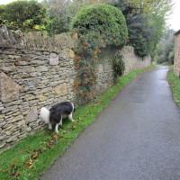 Dog-friendly pub and dog walk near Banbury, Northamptonshire - Dog walks in Northamptonshire