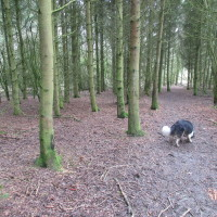 A44 dog-friendly pub and dog walk, Oxfordshire - Dog walks in Oxfordshire