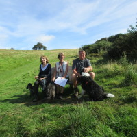 M5 Junction 4 Waseley Hills dog walks and cafe, Worcestershire - Dog walks in Worcestershire