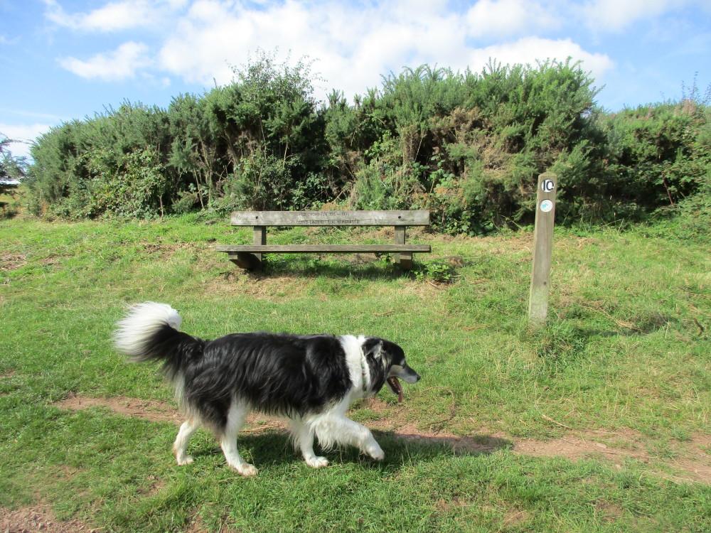 M5 Junction 4 Waseley Hills dog walks and cafe, Worcestershire - Dog walks in Worcestershire