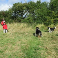 A435 near Alcester dog-friendly pub and dog walk, Warwickshire - Dog walks in Warwickshire