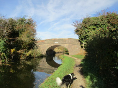 M42 Junction 9 waterside dog walk, Warwickshire - Driving with Dogs