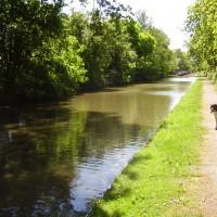 M40 Junction 15 dog-friendly pub and dog walk, Warwickshire
