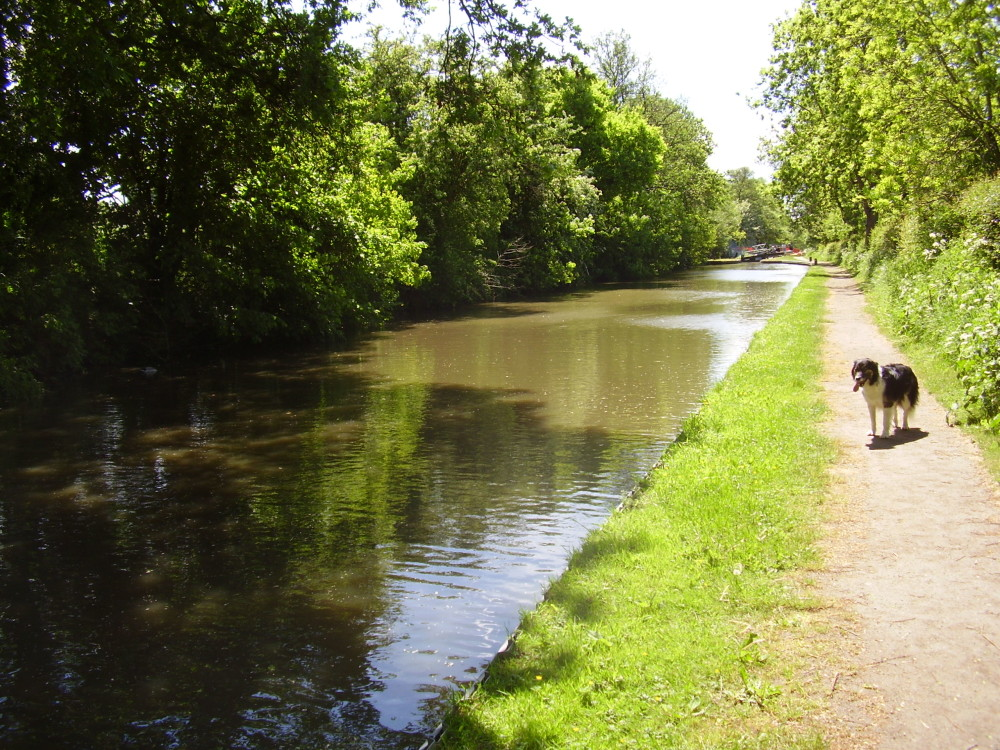 M40 Junction 15 dog-friendly pub and dog walk, Warwickshire - Dog walks in Warwickshire