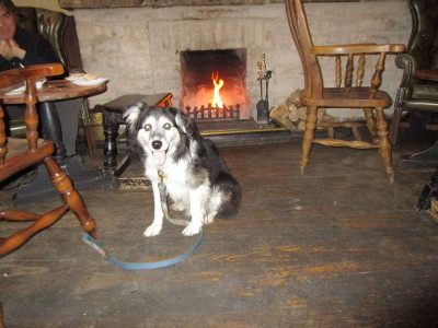 Woodstock dog-friendly pub and walk, Oxfordshire - Driving with Dogs