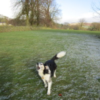 Dog-friendly pub and dog walk near Congleton, Cheshire