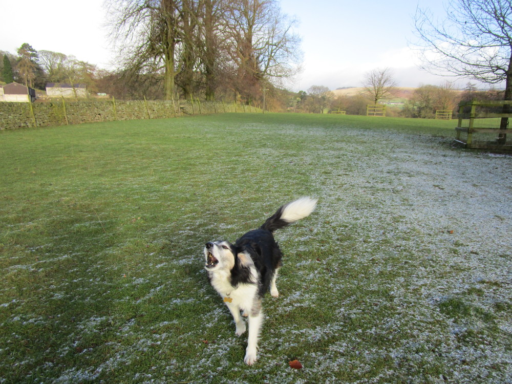 Dog-friendly pub and dog walk near Congleton, Cheshire - Image 2