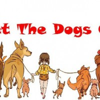 Dog walking & Day care services in Welwyn, Hertfordshire - Image 1