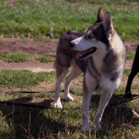 Dog walking & Day care services in Welwyn, Hertfordshire - Image 2