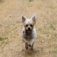Dog walking & Day care services in Welwyn, Hertfordshire - Image 3